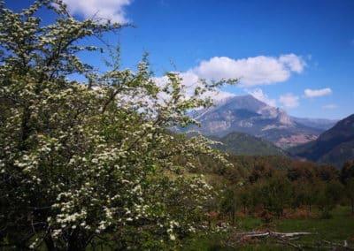 can-blanc-de-vilacireres-ecoturisme-al-pedraforca