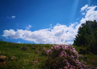 can-blanc-de-vilacireres-ecoturisme-al-pedraforca-fotografia