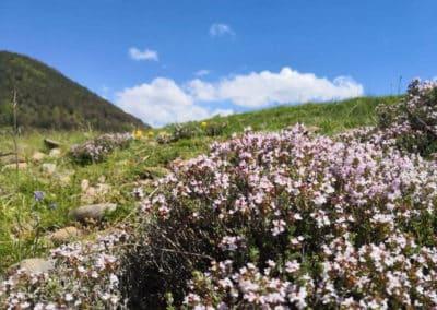 can-blanc-de-vilacireres-ecoturisme-al-pedraforca-natura